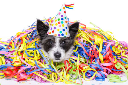 poodle dog having fun and  a party with serpentine streamers, for birthday or new years eve ,wearing a hat ,  isolated on white background Archivio Fotografico