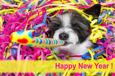 happy poodle dog having a party with serpentine streamers, for  new years eve and blowing a whistle horn Stock Photo