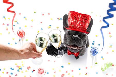 法國牛頭犬狗慶祝新年前夕與所有者和蛇紋石飄帶和五彩紙屑上孤立的香檳杯 版權商用圖片