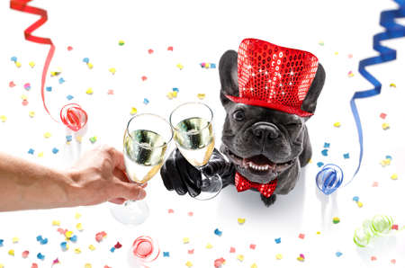 french bulldog dog celebrating new years eve with owner and champagne  glass isolated on serpentine streamers and confetti Foto de archivo