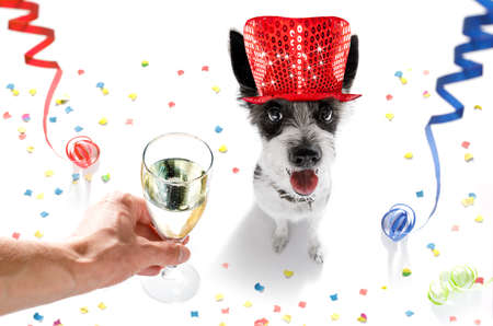 poodle: poodle dog celebrating new years eve with owner and champagne  glass isolated on white background , serpentine streamers and confetti