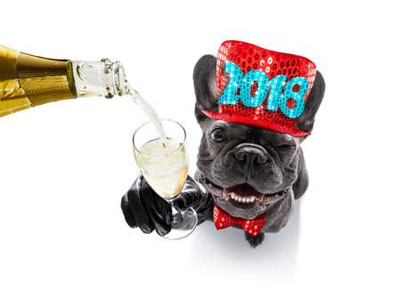 소유자 및 샴페인 유리 흰색 배경에, 넓은 각도보기를 격리하는 새로운 년 이브를 축하하는 프랑스 불독 강아지 스톡 콘텐츠