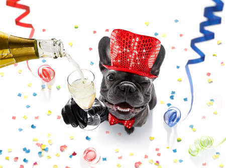 french bulldog dog celebrating new years eve with owner and champagne  glass isolated on serpentine streamers and confetti Archivio Fotografico