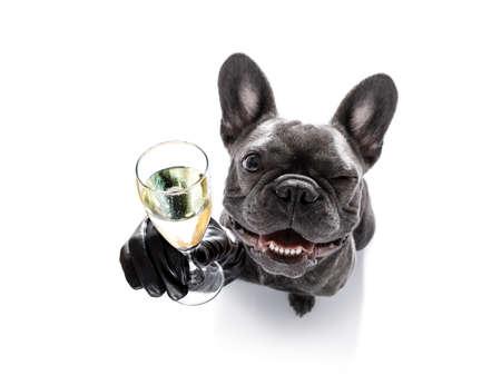 Französisch Bulldog Hund feiert Silvester mit Besitzer und Champagnerglas isoliert auf weißem Hintergrund, Weitwinkel-Ansicht