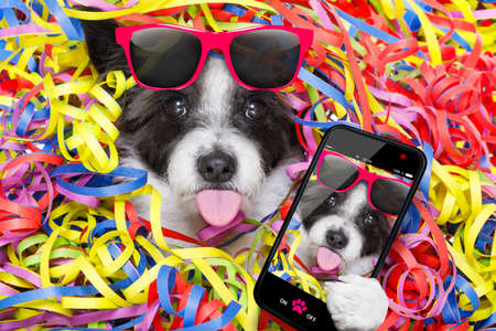 poodle dog having a party with serpentine streamers, for birthday or new years eve sticking out the tongue taking a selfie with smartphone or cell phone