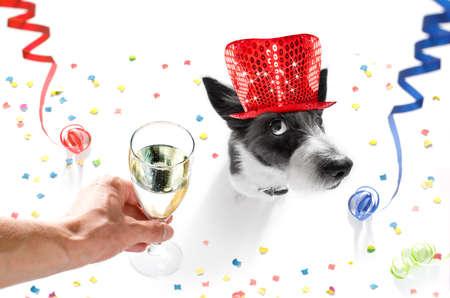 serpentinas: caniche, perro, celebrar, fin de año, vísperas, con, dueño, y, copa de champán, aislado, blanco, fondo, serpentino, serpentinas, y, confeti
