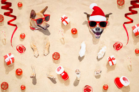 couple of two  dogs buried in the sand at the beach on merry christmas holiday ,gifts , boots and serpentine streamers all over the place Stockfoto