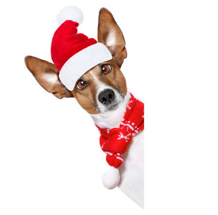wait: christmas  santa claus  jack russell dog isolated on white background with  red  hat , besides white banner blank placard, funny crazy  silly eyes Stock Photo