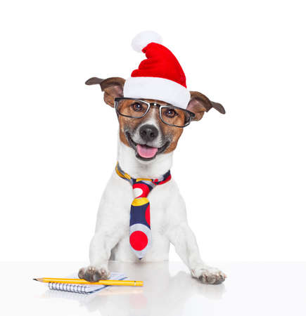 jack russell boss or business dog in office desk  at christmas holidays with santa claus hat and reading glasses Stock Photo