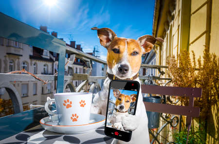 jack russell dog having a coffee or tea break on balcony with cup and spoon on table , taking a selfie  with smartphone or cell phone