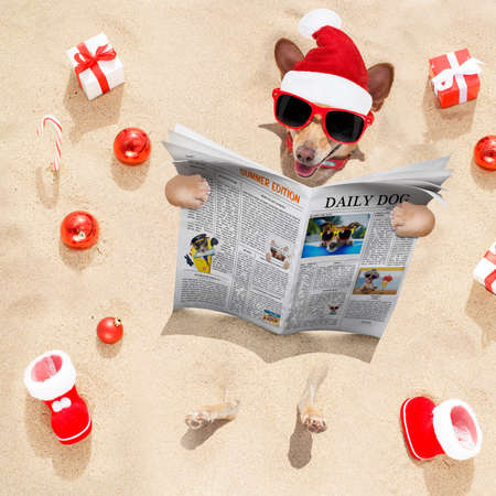 chihuahua dog  buried in the sand at the beach on  vacation christmas holidays ,  in hot summer wearing red sunglasses, reading a newspaper or magazine Stockfoto