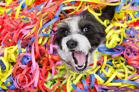 perro caniche teniendo una fiesta con serpentinas serpentinas, para cumpleaños o feliz año nuevo riendo a carcajadas