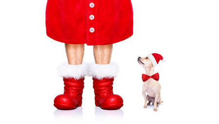 wait: christmas chihuahua santa claus  dog isolated on white background with red  hat and boots for the holidays