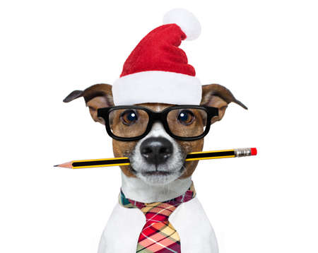 jack russell dog with pencil or pen in mouth  wearing nerd glasses for work as a boss or secretary ,on christmas holidays vacation with santa claus hat Stock Photo