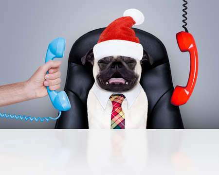 hear business call: office businessman pug  dog  as  boss and chef , busy and burnout , sitting on leather chair and desk, telephones hanging around, on christmas holidays vacation with santa claus hat Stock Photo