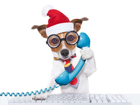telephone interview: crazy jack russell dog with nerd glasses as an office business worker on the phone or telephone, isolated on white background, on christmas holidays vacation with santa claus hat