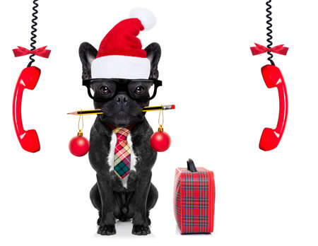 hear business call: office businessman french bulldog dog with pen or pencil in mouth with bag or suitcase isolated on white background, on christmas holidays vacation with santa claus hat and telephones hanging