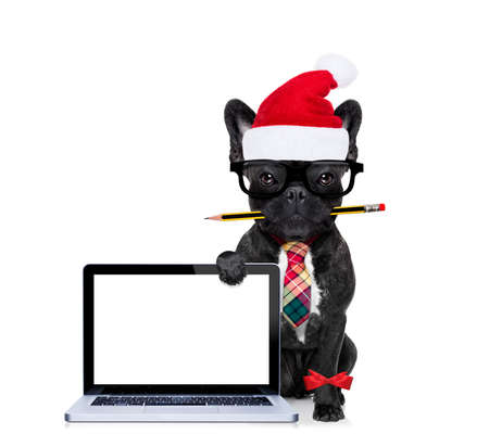 office businessman french bulldog dog with pen or pencil in mouth behind a  blank pc computer laptop screen , isolated on white background, on christmas holidays vacation with santa claus hat