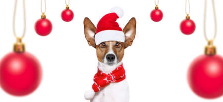 wait: christmas  santa claus  jack russell dog isolated on white background with  red  holiday hat , funny crazy sillly eyes and tree ornaments balls Stock Photo