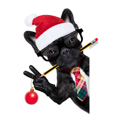 office businessman french bulldog dog with pen or pencil in mouth behind a  blank white banner or placard, isolated on white background, on christmas holidays vacation with santa claus hat