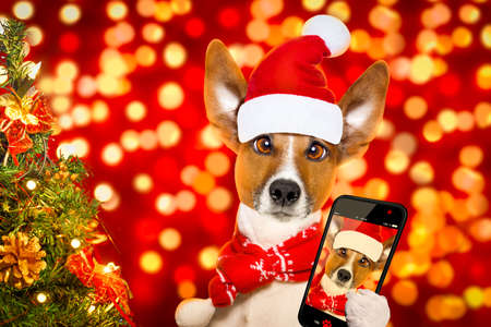 christmas  santa claus  jack russell dog with blur lights  background with  red  hat , behind  ,xmas decoration tree ,funny crazy silly eyes, taking a selfie with smartphone or cell phone