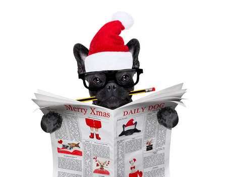 office businessman french bulldog dog with pen or pencil in mouth  reading a newspaper or magazine, on christmas holidays vacation with santa claus hat Stock Photo