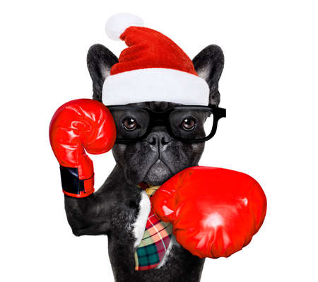 french bulldog boxing dog with big red gloves businessman , manager, or secretary isolated on white background, on christmas holidays vacation with santa claus hat
