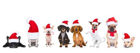 kerst santa claus rij van honden geïsoleerd op witte achtergrond, met grappige rode vakantie hoed Stockfoto