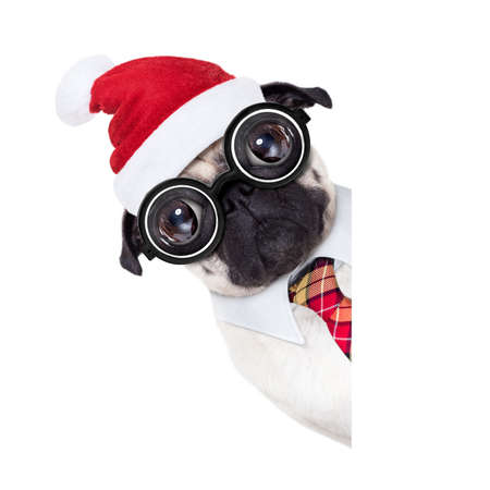 dumb crazy pug dog with nerd glasses as an office business worker, isolated on white background, on christmas holidays vacation with santa claus hat , behind  empty banner or placard