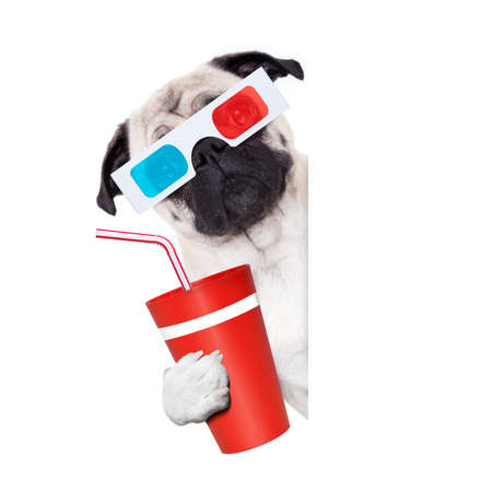 pug dog at the cinema watching the  movies  with 3d glasses isolated on white background , with soda beverage