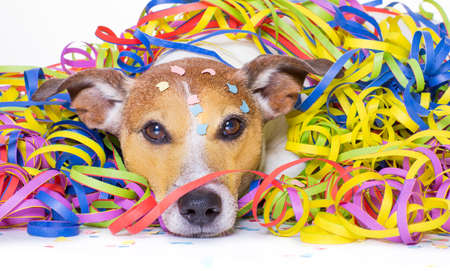 funny jack russell dog having fun and a party with serpentine streamers, for birthday or happy new year Stock Photo