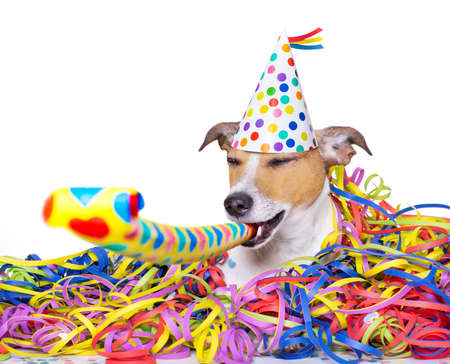 serpentinas: happy jack russell dog having a party with serpentine streamers, for  new years eve and blowing a whistle horn