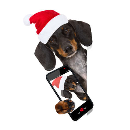 funny dachshund sausage  santa claus dog on christmas holidays wearing red holiday hat, isolated on white background, behind a banner taking a selfie with smartphone cell phone Stock Photo
