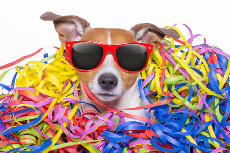 funny jack russell dog having fun and a party with serpentine streamers, for birthday or happy new year, wearing sunglasses