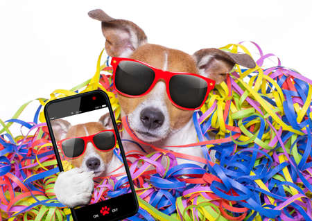 serpentinas: funny jack russell dog having fun and a party with serpentine streamers, for birthday or happy new year, taking a selfie with smartphone or cell phone