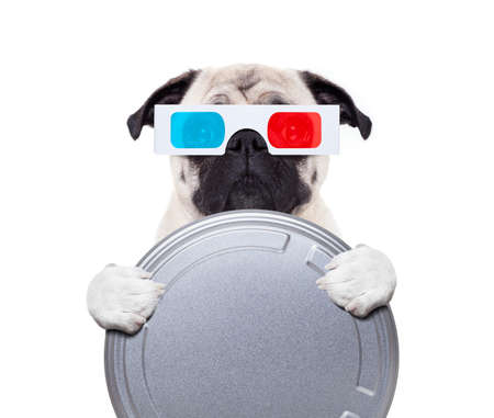 pug dog watching a  movie  with 3d glasses and a  cinema tin roll, isolated on white background