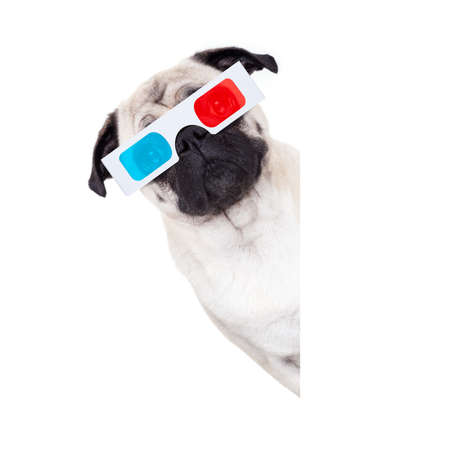pug dog at cinema watching the  movies  with 3d glasses isolated behind  empty white background