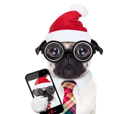 dumb crazy pug dog with nerd glasses as an office business worker, isolated on white background, on christmas holidays vacation with santa claus hat, taking a selfie