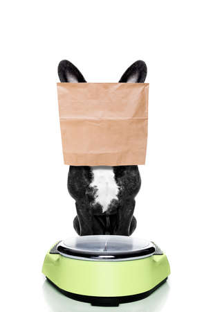 conscience: french bulldog  dog with guilty conscience  for overweight, and to loose weight , standing on a scale with paper bag over head , isolated on white background
