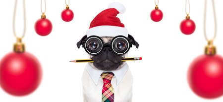 dumb crazy pug dog with nerd glasses as an office business worker, isolated on white background, on christmas holidays vacation with santa claus hat Stock Photo