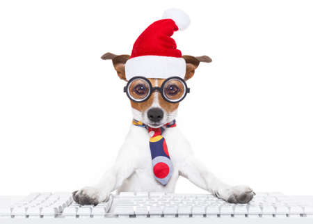 crazy jack russell dog with nerd glasses as an office business worker, isolated on white background, on christmas holidays vacation with santa claus hat