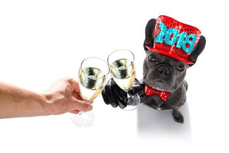 pies Buldog francuski świętuje 2018 sylwestra z właścicielem i kieliszek szampana na białym tle, szeroki kąt widzenia