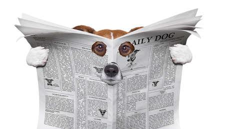 espía curioso perro espiando a través del agujero en el periódico, papel o revista, aislado sobre fondo blanco Foto de archivo