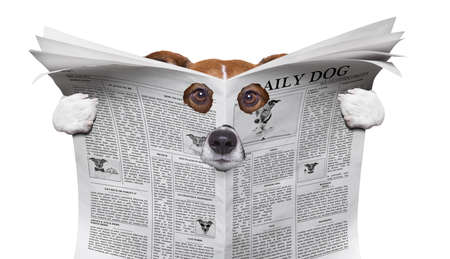 spion nieuwsgierige hond gluren door gat in krant, papier of tijdschrift, geïsoleerd op een witte achtergrond Stockfoto