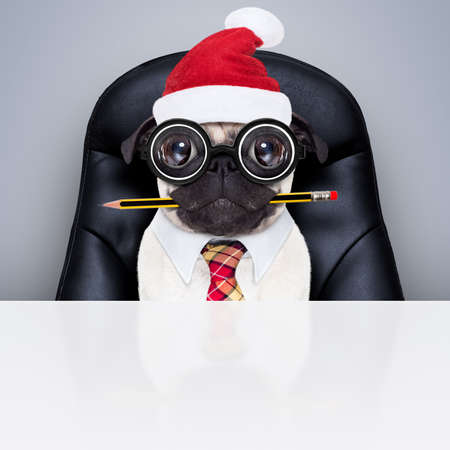 authors: office businessman pug dog  as  boss and chef , busy and burnout , sitting on leather chair and desk, in need for vacation, on christmas holidays  with santa claus hat Stock Photo
