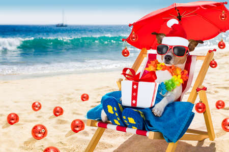 jack russell dog   in  hammock beach chair on  summer christmas vacation holidays, with red   santa claus hat and  xmas gift or present box , balls all over the place in background