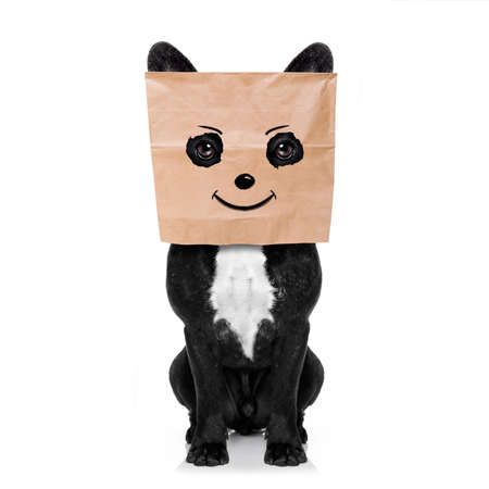 happy  french bulldog , with a smiley smile drawing , hiding behind a paper bag on his head, isolated on white background