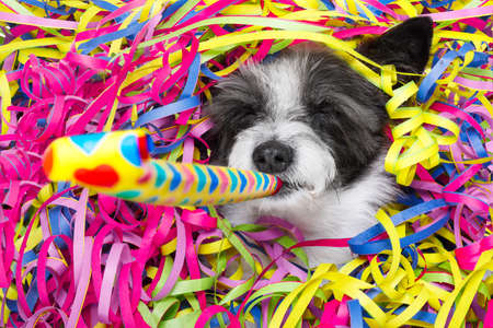 poodle dog having a party with serpentine streamers, for birthday or new years eve and blowing a whistle horn Imagens