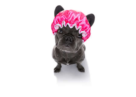 french bulldog dog  , drying hair with a shower cap, isolated on white background, looking up sad at you Stock Photo
