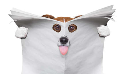 spy curious  dog  peeping  through hole in   empty blank newspaper, paper or magazine, isolated on white background, sticking out tongue Banque d'images